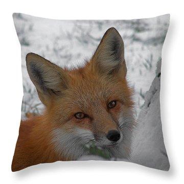 The Fox 4 Throw Pillow by Ernie Echols