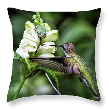 The Frog And The Hummingbird Throw Pillow