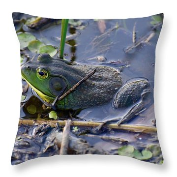The Frog Remains Throw Pillow