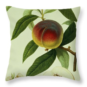 The Galande Peach Throw Pillow by William Hooker