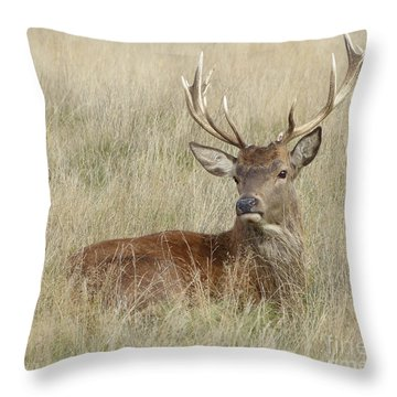 The Gentle Stag Throw Pillow