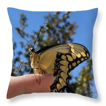 The Glorious Swallowtail  Throw Pillow
