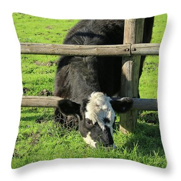Throw Pillow featuring the photograph The Grass Is Always Greener by Art Block Collections