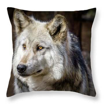 Throw Pillow featuring the photograph The Gray Wolf by Teri Virbickis