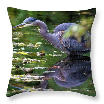 The Great Blue Heron Hunting For Food Throw Pillow by David Gn