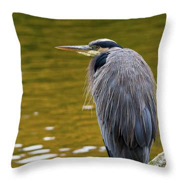 The Great Blue Heron Perched On A Tree Branch Throw Pillow by David Gn