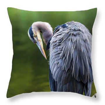 The Great Blue Heron Perched On A Tree Branch Preening Throw Pillow by David Gn
