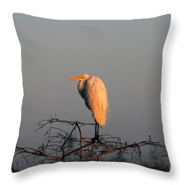 The Great Egret  Throw Pillow by David Lee Thompson