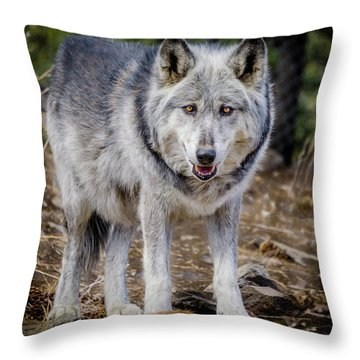 Throw Pillow featuring the photograph The Great Gray Wolf by Teri Virbickis