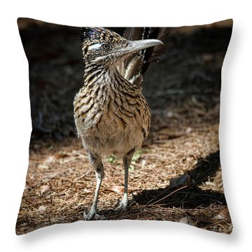 The Greater Roadrunner Walk  Throw Pillow