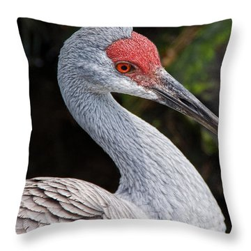 The Greater Sandhill Crane Throw Pillow by Christopher Holmes