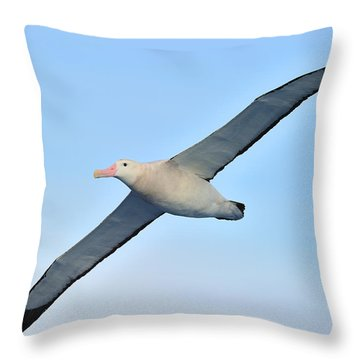 The Greatest Seabird Throw Pillow by Tony Beck