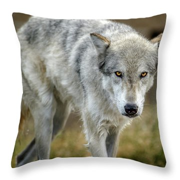 The Grey Wolf Shake Throw Pillow