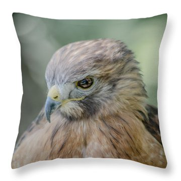 The Hawk Throw Pillow by David Collins