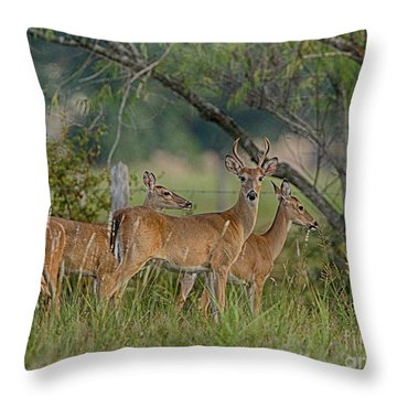 Throw Pillow featuring the photograph The Herd by Charles McKelroy