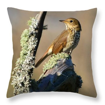 The Hermit Thrush Throw Pillow