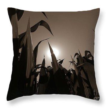 The Hiding Sun - Sepia Throw Pillow