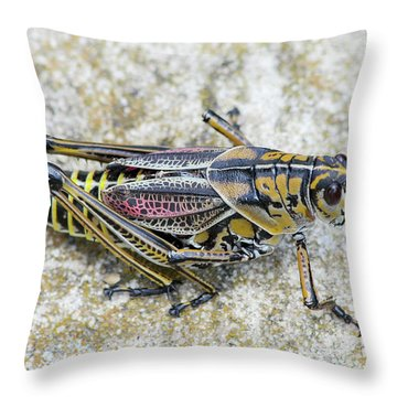 The Hopper Grasshopper Art Throw Pillow