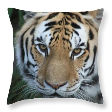 Throw Pillow featuring the photograph The Hunter by Laddie Halupa
