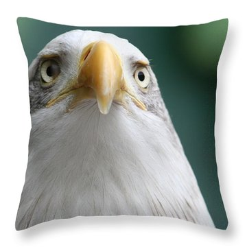 Throw Pillow featuring the photograph The Hunters Stare by Laddie Halupa