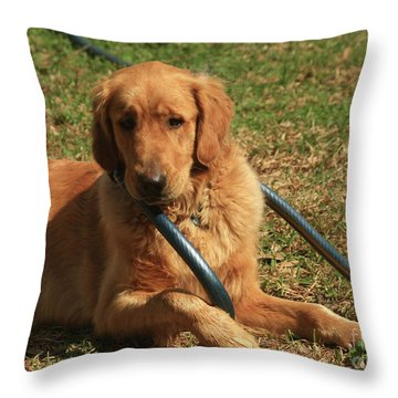 The Innocent Throw Pillow by Kim Henderson