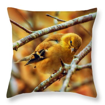 The Inquisitive Goldfinch Throw Pillow