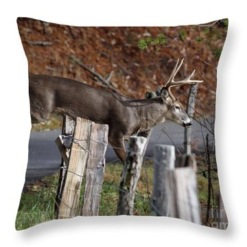 Throw Pillow featuring the photograph The Jumper 2 by Douglas Stucky