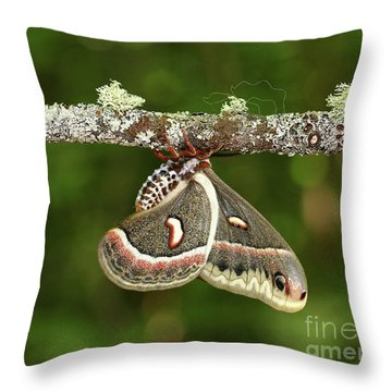The King. Throw Pillow by Denis Dumoulin