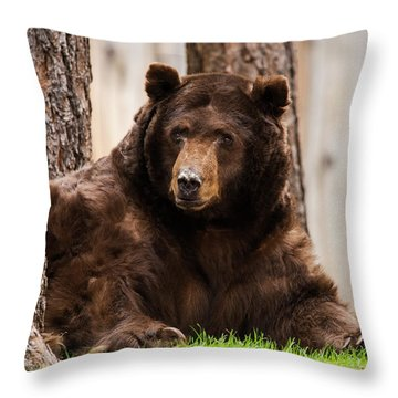 The King Of Tahoe By Brad Scott Throw Pillow