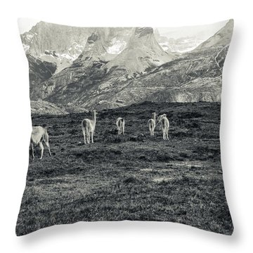 The Lamas Throw Pillow by Andrew Matwijec