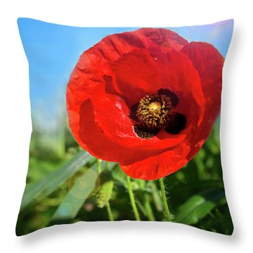 The Large Poppy Throw Pillow by Stephan Grixti