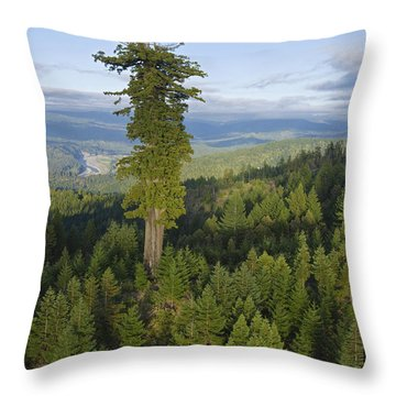 The Largest Patch Of Old Growth Redwood Throw Pillow by Michael Nichols