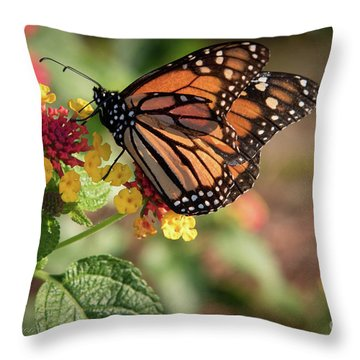 The Last Days ... Throw Pillow