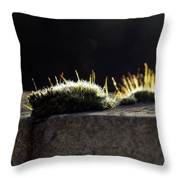 The Last Sun Of December Throw Pillow