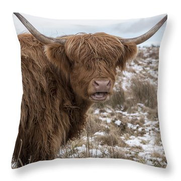 The Laughing Cow, Scottish Version Throw Pillow by Jeremy Lavender Photography