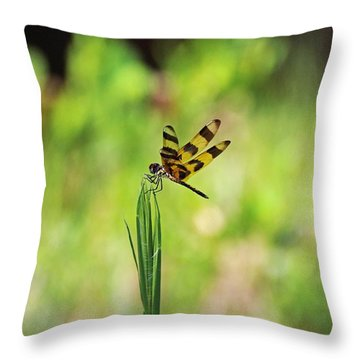 Throw Pillow featuring the photograph The Liberation by Michiale Schneider