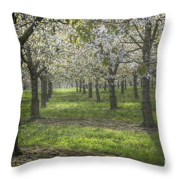 The Life Awakes 12 Throw Pillow by Bruno Santoro