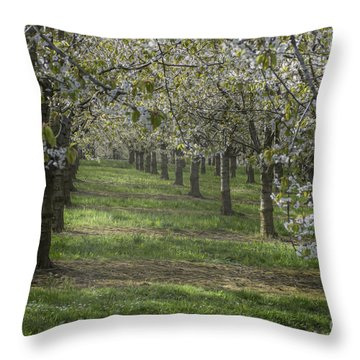 The Life Awakes 13 Throw Pillow by Bruno Santoro