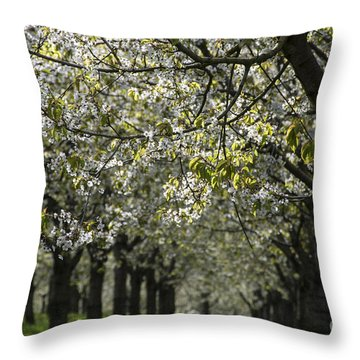 The Life Awakes 15 Throw Pillow by Bruno Santoro