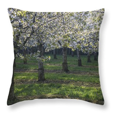 The Life Awakes 5 Throw Pillow by Bruno Santoro