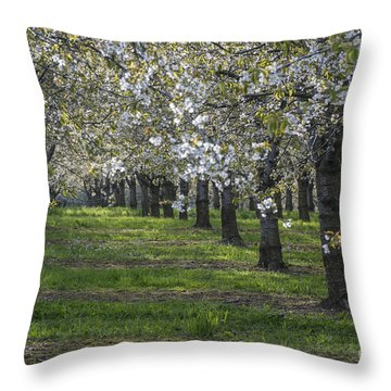 The Life Awakes 7 Throw Pillow by Bruno Santoro