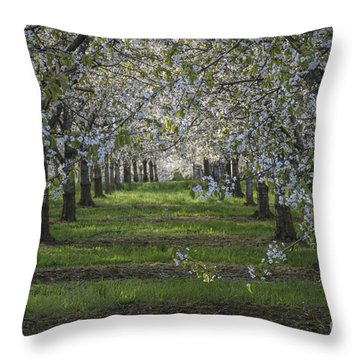 The Life Awakes 8 Throw Pillow by Bruno Santoro