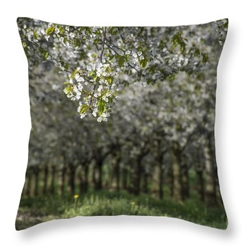 The Life Awakes Throw Pillow