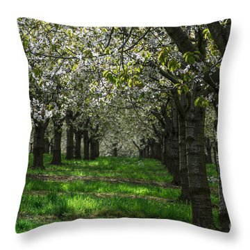 The Life Awakes14 Throw Pillow by Bruno Santoro
