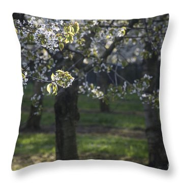The Life Awakes3 Throw Pillow by Bruno Santoro