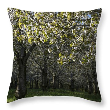 The Life Awakes4 Throw Pillow by Bruno Santoro