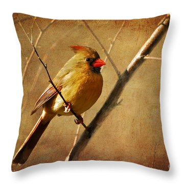 Throw Pillow featuring the photograph The Little Mrs. by Lois Bryan
