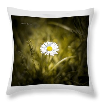 Throw Pillow featuring the photograph The Lonely Daisy by Stwayne Keubrick