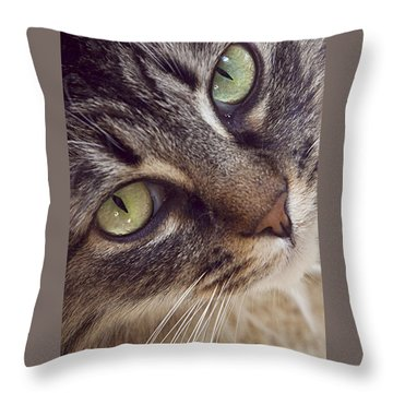 The Look Of Love Throw Pillow by Lynn Andrews