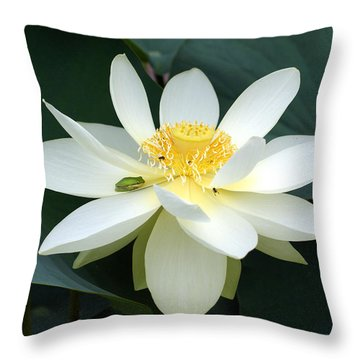 The Lotus Flower The Frog And The Bee Throw Pillow